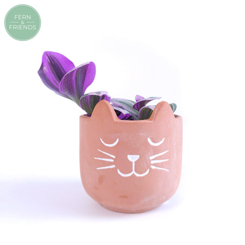 Tradescantia Albiflora Nanouk in Cat Pot