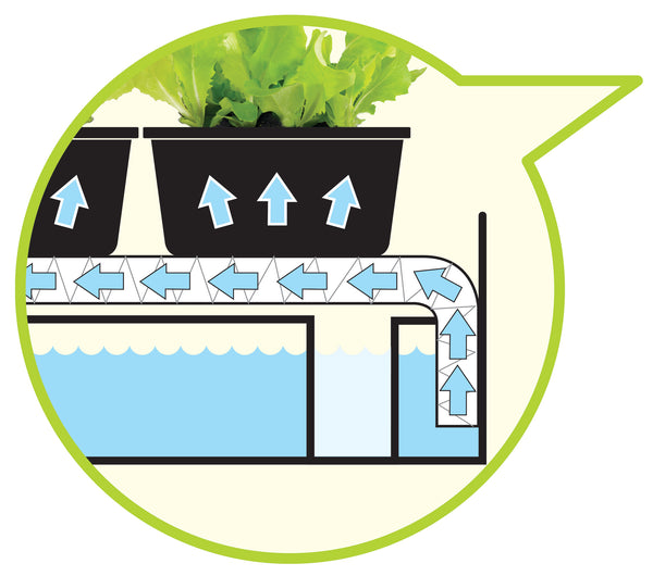 G139B Grow Light Garden Self Watering Illustration.jpg