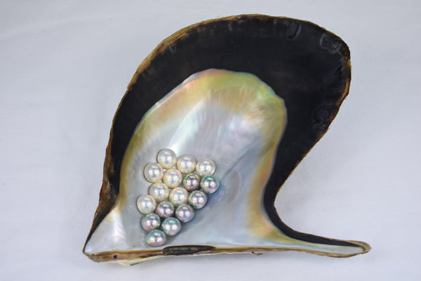 Mabe pearls on shell