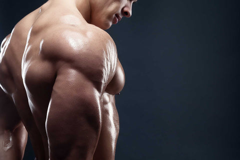 Want to create Muscle