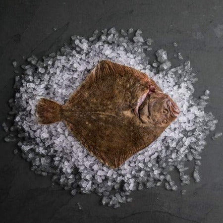 Whole Turbot sold by Spence Hall