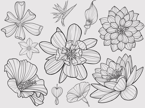 20 Flowers Stamps for Procreate Application by PeonyBrush