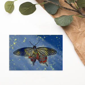 Moonlight Moth Postcard