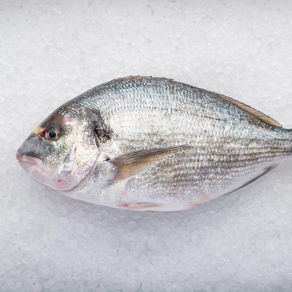 Whole Gilthead Bream
