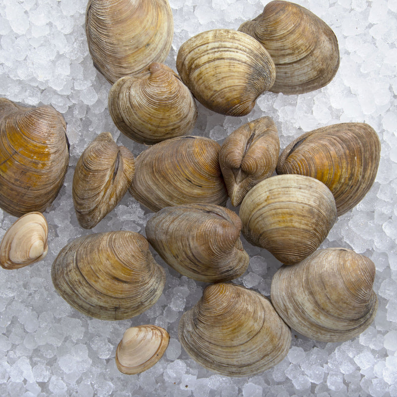 Dorset Clams
