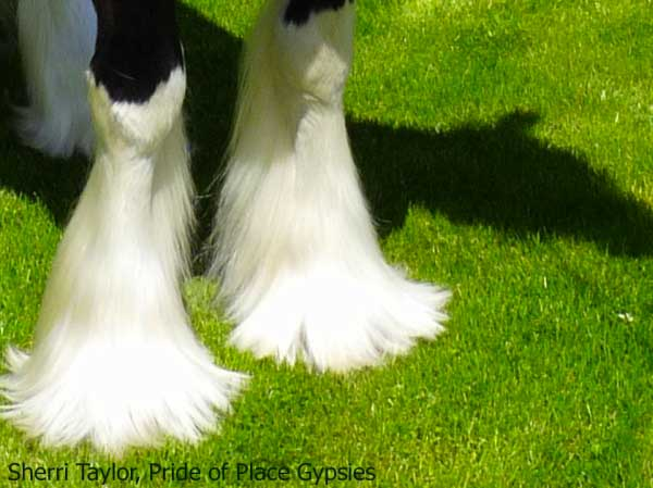 Feathered Feet