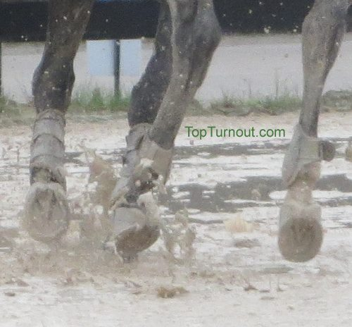 Muddy Horse Hooves