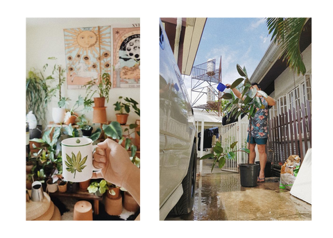 Plant Mug and Matthew tending to a Rubber Plant