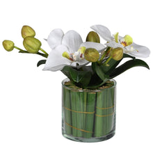 Load image into Gallery viewer, Small White Phalaenopsis Orchid in Glass with Greenery