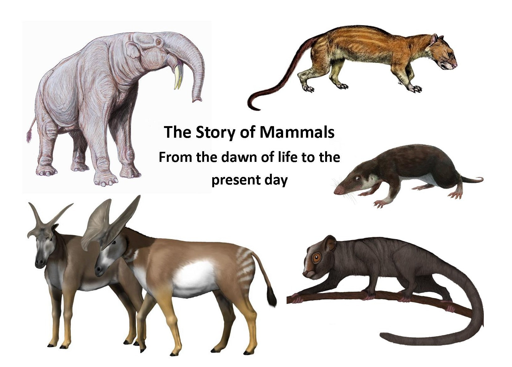 The Story of Mammals