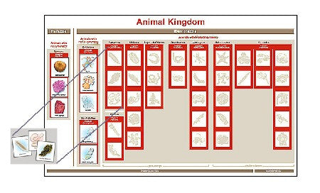 Animal Kingdom Chart