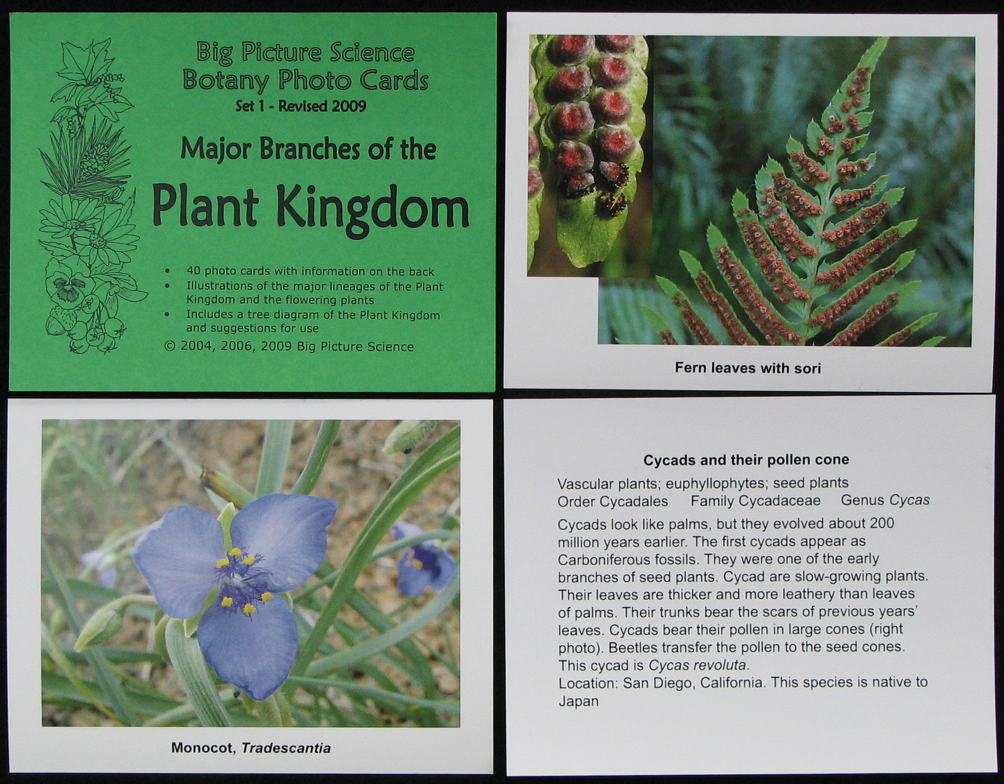 Photo Card set 1 - Major Branches of the Plant Kingdom