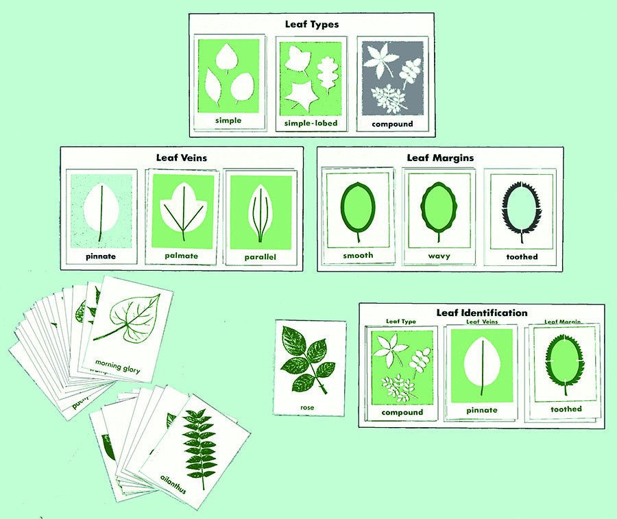 Leaf Characteristics from inprint for children