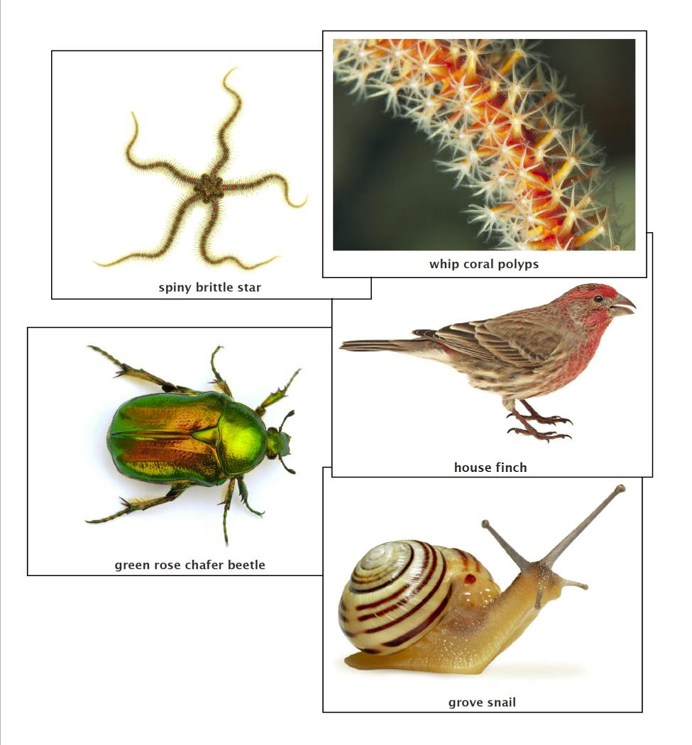 Image of: Specimen Collection Big Picture Science Major Phyla Of The Animal Kingdom Big Picture Science