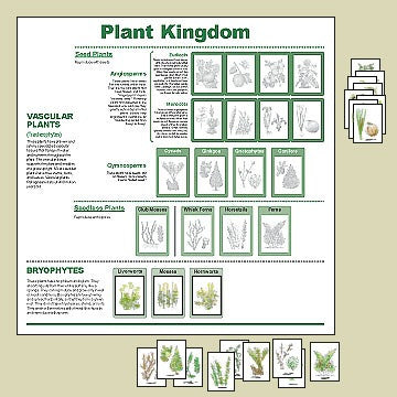 plant kingdom chart � big picture science