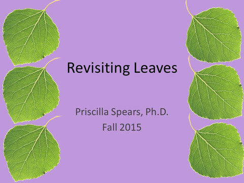 Revisiting Leaves - PowerPoint