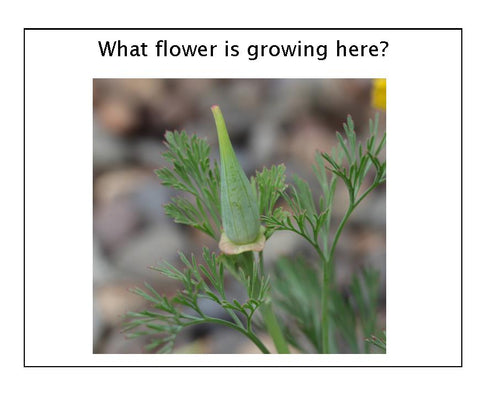 What Flower Is Growing Here? - file for printing