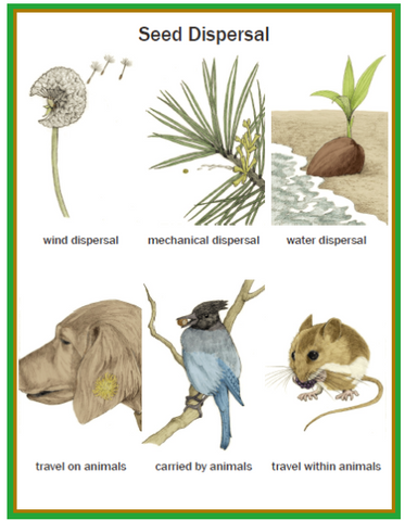 Illustrated Botany for Children - Seeds