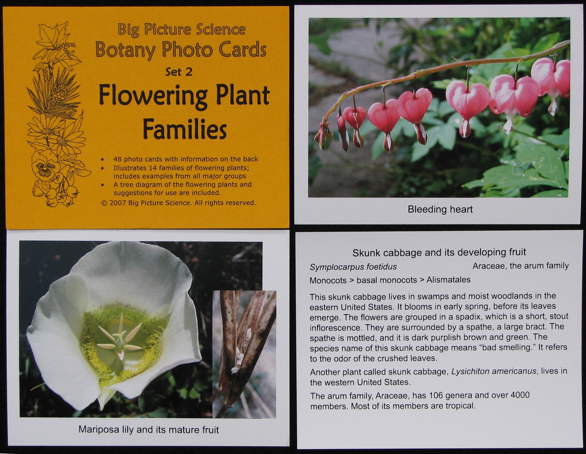 Flowering Plant Families photocard set from Big Picture Science