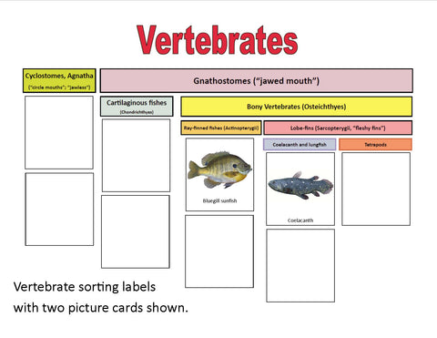Sorting Branches on the Tree of Life: Vertebrates and Plants - printed cards