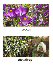 Early Spring Flower Cards - file for printing