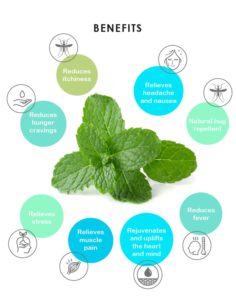 Yein&Young Peppermint Essential Oil - 10ml