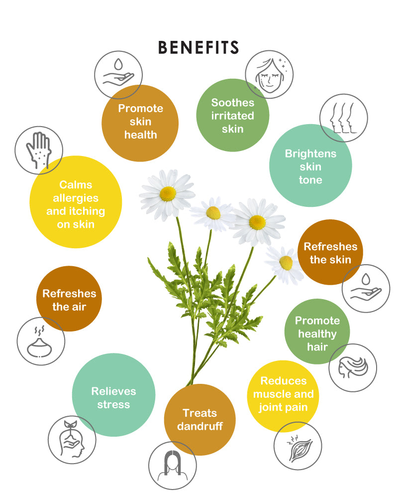 Yein&Young Chamomile Essential Oil - 10ml