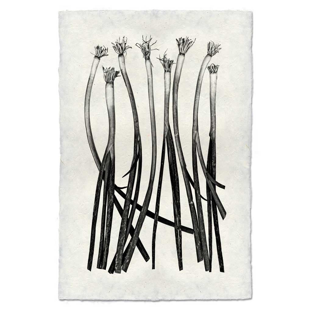 Green Onions Digital Print on Handmade Paper
