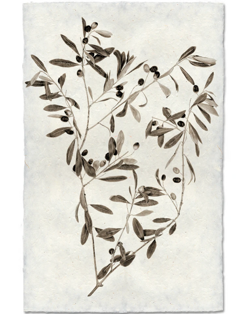 Olive Branch Print, Cotton Rag