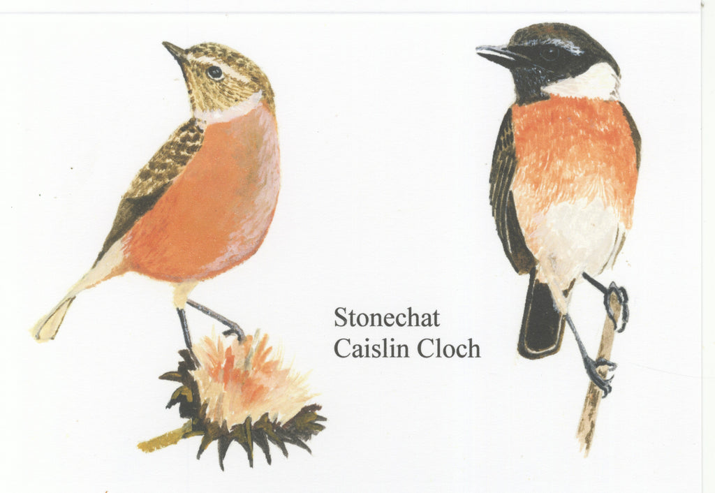 Stonechat - The Art of Phil Davis