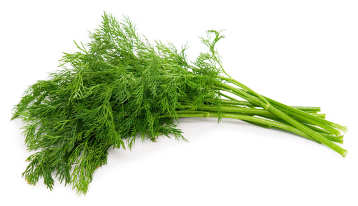 Fresh Dill  - (1oz. bunch)