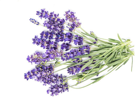 Fresh Lavender - (1oz. bunch)