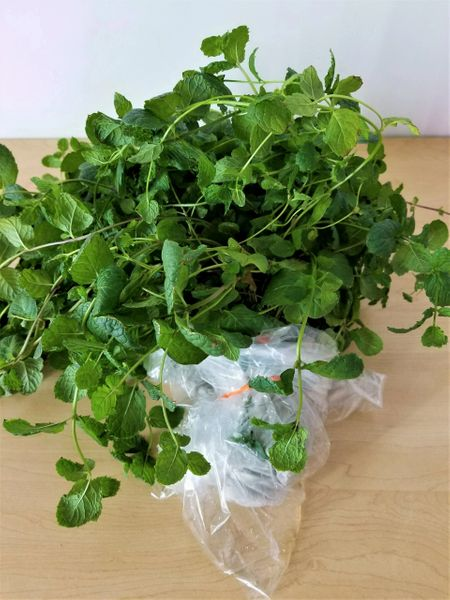 Sweet Mint - 1lb. bag (wholesale)