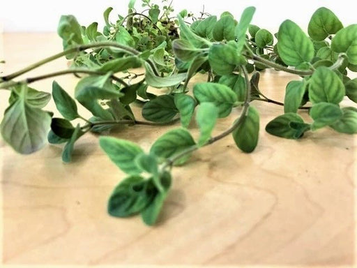 Greek Oregano (organic)
