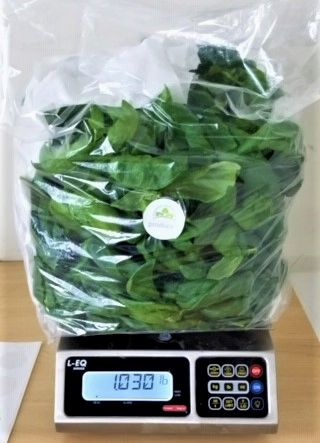 Sweet Basil- 1lb. bag (WHOLESALE - 3LB MINIMUM)