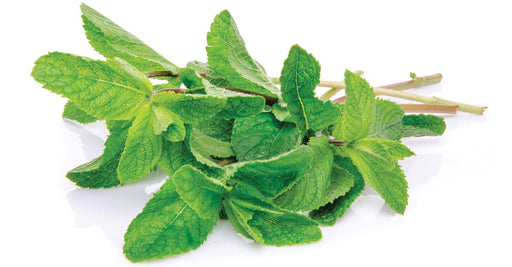 Fresh Spearmint - (1oz. bunch)