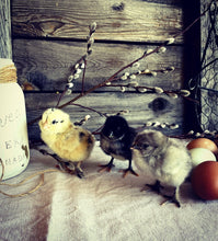 Load image into Gallery viewer, Easter Egger Chicks