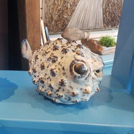 Large Spike puffer fish