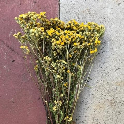 Fresh dried flower bunch - Tansy