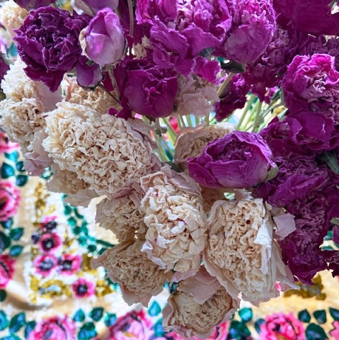 Fresh dried flower bunch - Peony