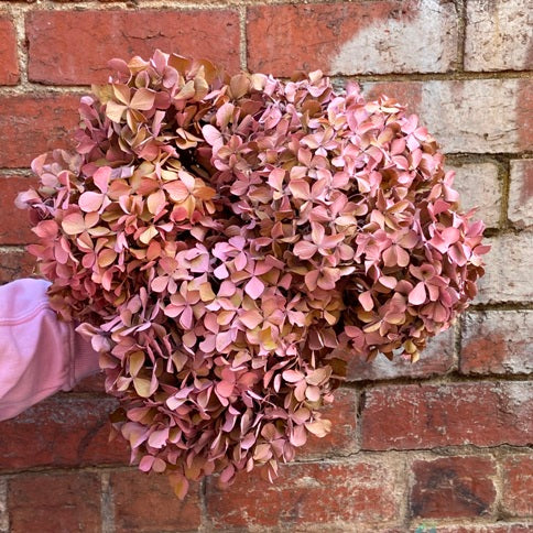 Dried and painted Hydrangea bunch- short stem