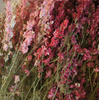 Fresh dried flower bunch - Larkspur