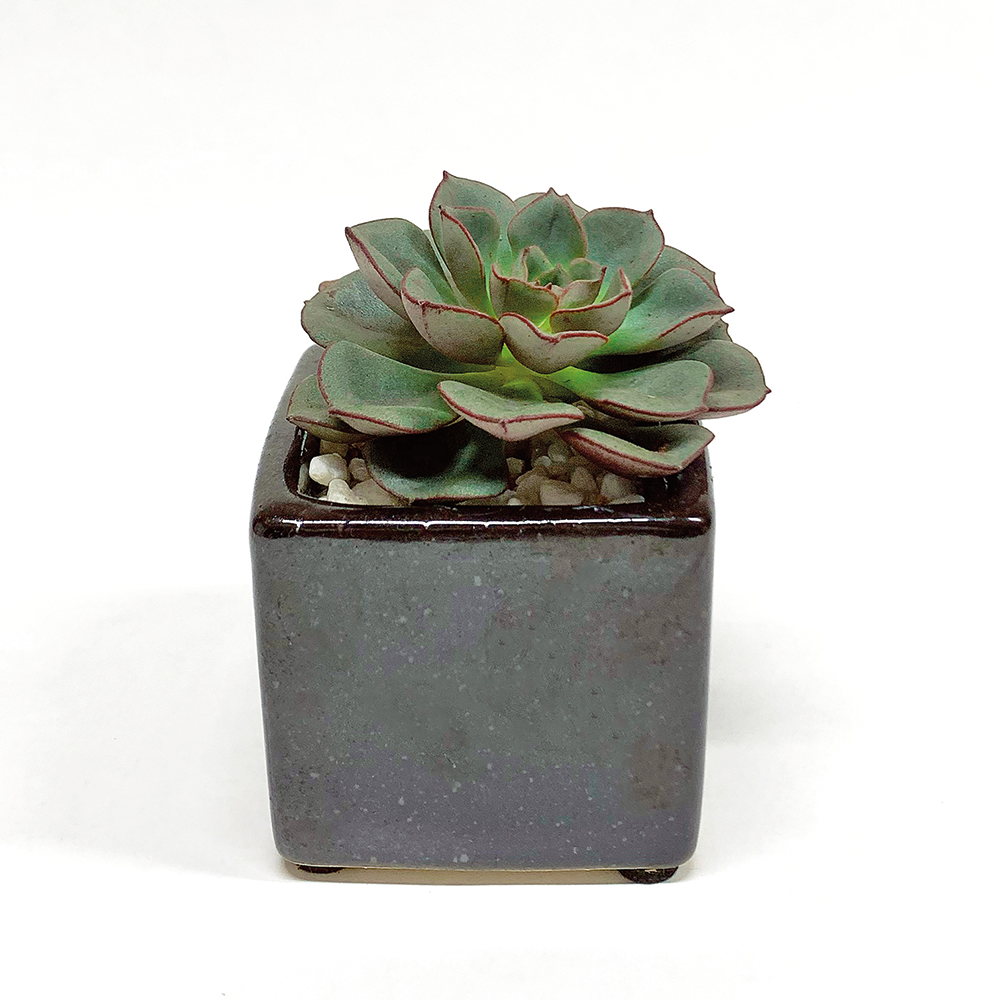 Succulent / square / black