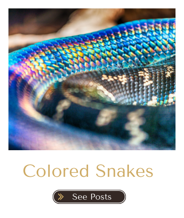 Colored snakes in dreams blog
