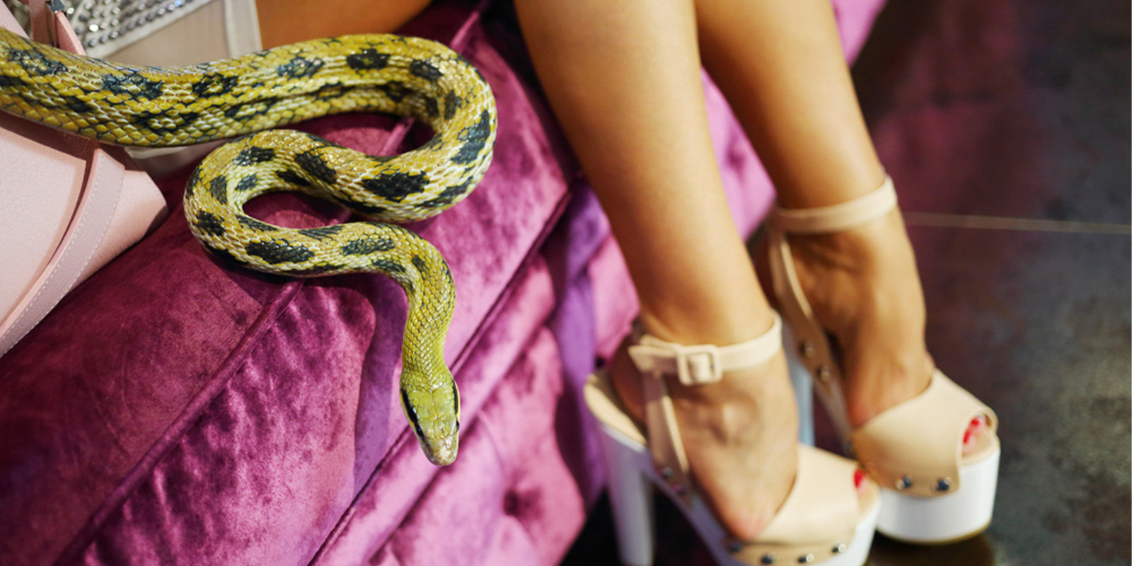 Woman legs and snake