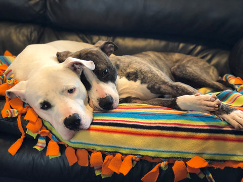 Chief and Annie are two of the Chonkly dogs we rescued!