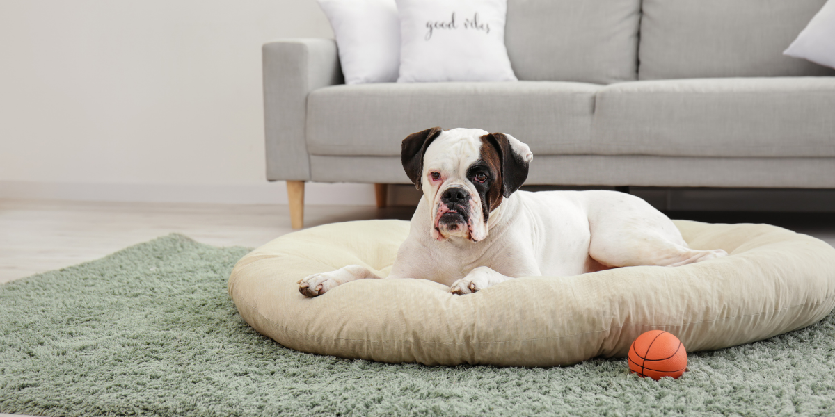 Pillow dog beds are a great option for dogs that like to burrow or have sensitive skin