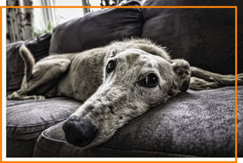 Common Dog Health Issues - Mobility issues