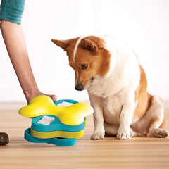 dog looking at a toy
