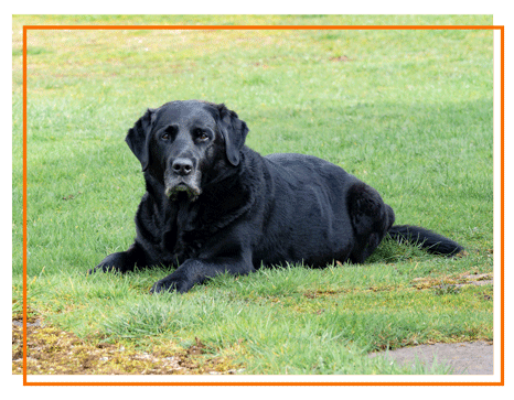 Old black dog lying down on the grass